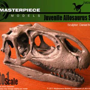 Juvenile Allosaurus skull